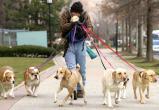 В Югре увеличат штрафы за неправильный выгул собак