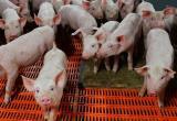 Жители Ханты-Мансийска наткнулись на свалку свиных трупов. ФОТО