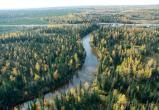 Прокуратура уличила «дочку» «Газпрома» в самовольном использовании лесного фонда в Октябрьском районе