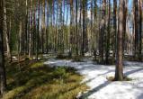 Полицейские нашли в югорском лесу заблудившуюся пару