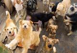 В Сургуте собирают подписи против жестокого убийства бездомных животных