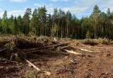 Всё идёт по плану. Природнадзор не увидел нарушений в масштабных вырубках леса в районе Югорска