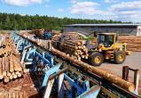 Правительство ХМАО сформировало инвестпроекты в сфере лесопользования на 5 млрд рублей