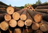 Россиянка пыталась незаконно вывезти из ХМАО в Казахстан 23 вагона леса