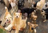 Жалобы на бездомных собак в Нягани