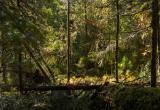 В Нефтеюганске в лесу ищут пропавшую 24-летнюю девушку