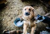 В Нягани намерены создать официальный приют для бездомных животных