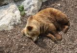Убивших медведей хантов пытаются засудить