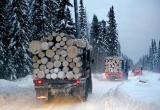 На дорогах Югры проверяют лесовозы