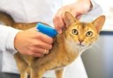 Ветеринарный центр проводит акцию по электронной идентификации мелких домашних животных