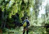 В Октябрьском районе спасатели и волонтёры ищут пропавшего в лесу мужчину