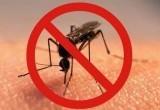 Как обезопасить себя от насекомых