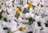 Ночью в Югре возможен мокрый снег