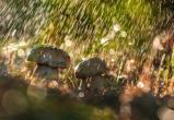 Пятница в Югре будет дождливой