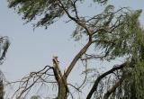 В западных и северо-западных районах Югры ожидается шквалистый ветер