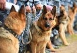 В Югре полицейская собака отыскала пропавшую женщину в лесу