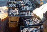 Три невода, 19 сетей и 5 тонн рыбы. Полицейские Берёзовского района задержали браконьеров. ФОТО