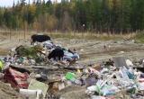 «Экологическая безопасность Югры» заявила об угрозе вспышки опасных заболеваний в Нижневартовском районе
