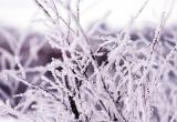 В воскресенье в Югре будет идти снег, местами метель