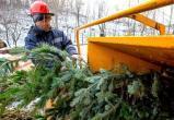 «Югре-Экологии» помогут переработать новогодние елки энергетики, экологи и муниципальные службы