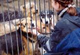 В Югре приняли порядок деятельности приютов для животных