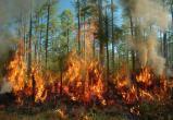 В Югорске пожарные тушат лес в черте города