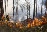 В Югре действует 11 лесных пожаров на территории заповедника «Малая Сосьва» и Советского лесничества