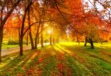 Любите ли Вы осень?