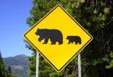 В жилом микрорайоне Нягани замечен медведь