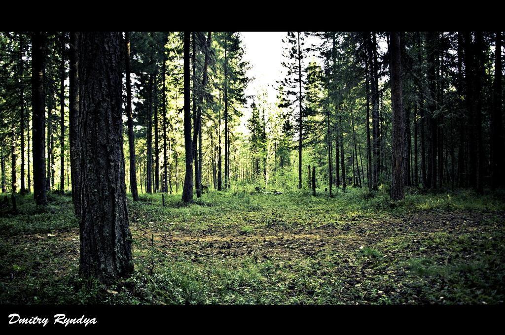 Фото Нягань, лес.